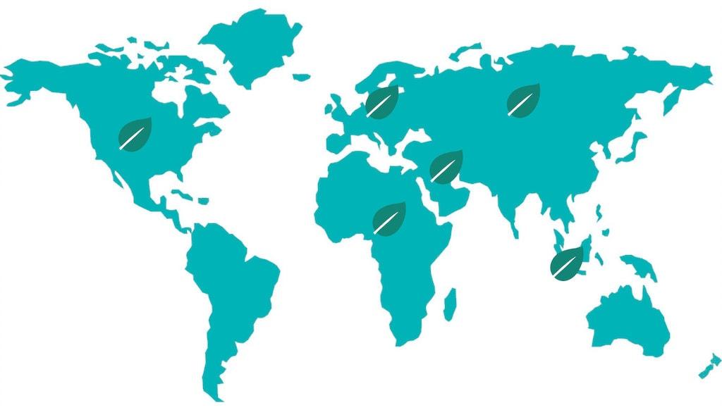 World Map with LivOliv Leaf